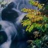 大岩川の秋c