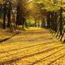 黄葉の園路