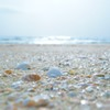 浜辺の宝石たち
