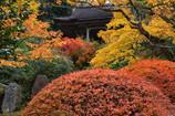 那谷寺 護摩堂の紅葉