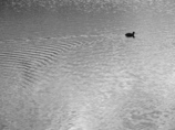 BW - 水面