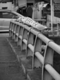 BW - 橋の上のカモメ