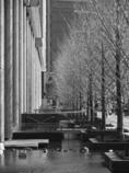 BW - 街路樹