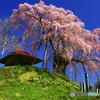 PH-0179_上石の不動桜④