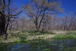 美しき川は流るる