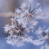 せせらぎの小径で咲く氷の華1