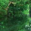 dense forest