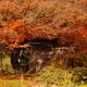 心も染まる萌ゆる秋