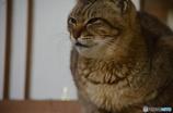 ふっくら猫ちゃん。