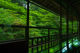 緑、映える季節