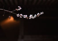 NIKON NIKON D500で撮影した(淡雪の色を残して…)の写真(画像)
