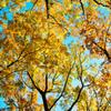 見上げて、深秋