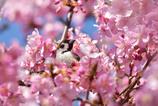 私も桜に似合うよ