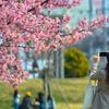 陽春を撮る