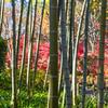 竹の向こう