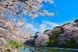 青空下の桜