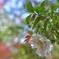 平林寺の山茶花