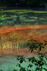 五色沼の銅