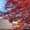 平林寺の茅葺き紅葉