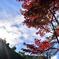 平林寺の空