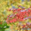 奥多摩の秋色