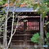 平林寺の木戸