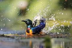 水浴びっ!