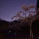 里山の夜桜