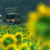向日葵列車