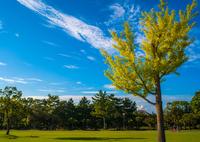 RICOH GXR A12で撮影した(秋の気配)の写真(画像)