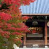 ☆秋の古刹めぐり--朝の色
