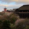 清水桜--京の桜便り03