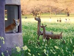 【2016.10.26】昭和記念公園