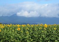 CANON Canon EOS 7D Mark IIで撮影した(梅雨明けの日)の写真(画像)