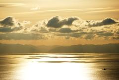 金色の海原