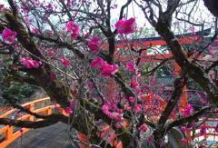下鴨神社の梅 その2