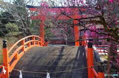 下鴨神社の梅 その1