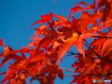 今年も紅葉の季節