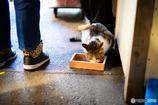 猫 ~ Df+NOKTONで築地場外市場散策