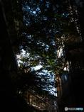 秋の伊香保の散歩道