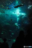 深海への旅立ち