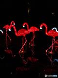 赤いフラミンゴ