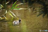 幼鳥の冒険