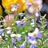 太陽に向いて咲く花