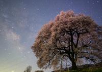 PENTAX PENTAX K-5で撮影した(銀河桜)の写真(画像)