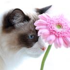 CANON Canon EOS 6Dで撮影した(花とネコ)の写真(画像)