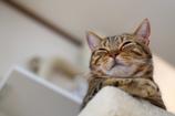 猫を幸せに撮る方法