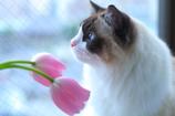 春を想って