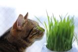 草原を想う