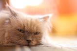 午後の猫カフェ